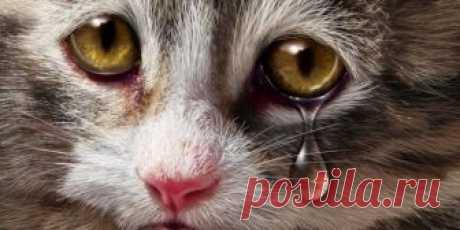 Врачи раскрыли секрет кошачьих слёз: умеют ли кошки грустить и плакать - Кот и кошка Практически каждый хозяин кошки знает, что его любимица испытывает эмоции: грустит, когда долго оста
