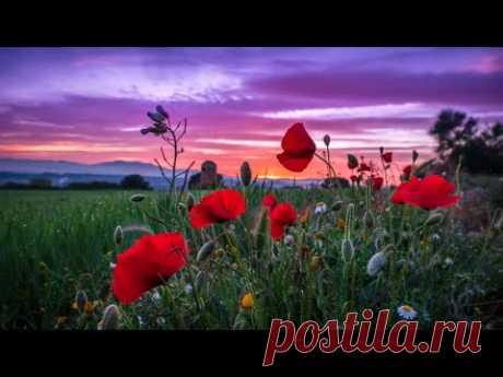 Замолкает летний вечер 💢 Песня Ванды Мотор на стихи Лидии Тагановой