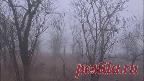 Крымский мост(11.12.2019)Кина не будет!!! Очень сильный туман!!!