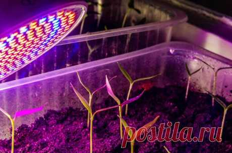 Как выбрать лампу для рассады? Во многих случаях садоводам-любителям не обойтись без лампы для рассады, или, как еще называют этот осветительный прибор, фитолампы.
