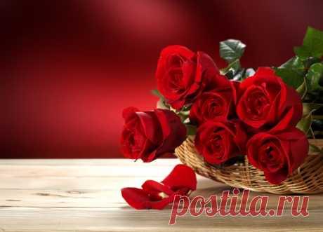 Обои на рабочий стол Цветы:Nature, Flowers, Flower, Red, Roses - скачать бесплатно.   Обои-на-стол.com