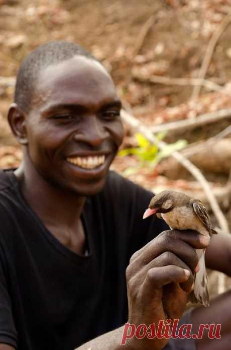 Охотясь за пчелиными сотами, люди Мозамбика и птицы-медоуказчики переговариваются между собой на удивительном наречии.