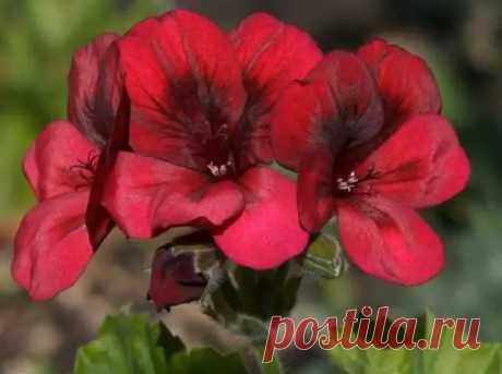 Цветы уход любят - Цветочки - медиаплатформа МирТесен