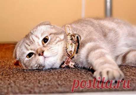 Все, что нужно знать о свище у кошек. В данной статьи я раскажу, почему может появиться такое неприятное явление, как свищ у котов, как его лечить и как уберечь своего питомца от подобных проблем.