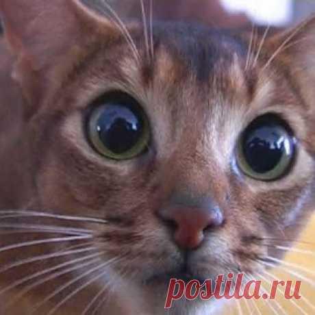 Эффективное средство от меток котов - МирТесен
