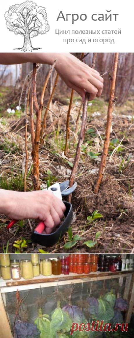 Что можно сажать в сентябре - работы на даче в саду в начале осени