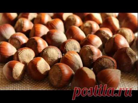 Фундук (Лещина) | Интересные факты об орехе