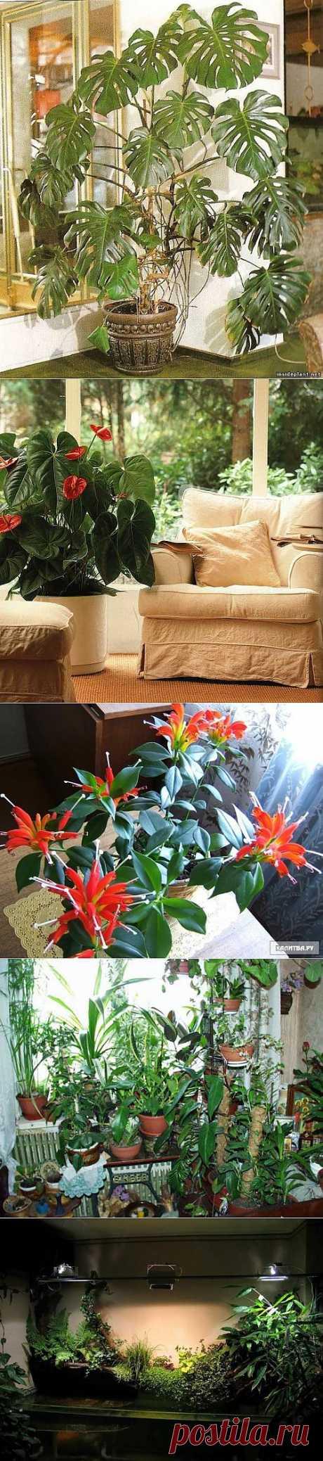 Украшаем помещение растениями / Домоседы