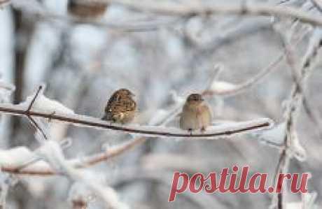 Сегодня 08 ноября в народном календаре Дмитриев день