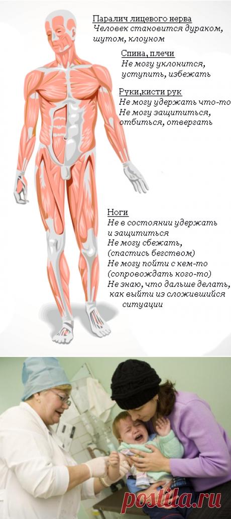 Рассеянный склероз: fillum