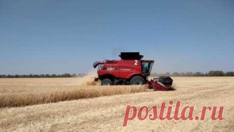 Россия диктует новые правила игры на мировом рынке зерна и готовится к сверхприбылям На мировом рынке пшеницы сегодня сложилась уникальная ситуация, которая уже принесла России сверхдоходы и дает стране неплохие перспективы