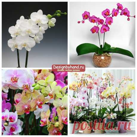 Орхидеи: уход и размножение. Фото и пошаговые инструкции по пересадке