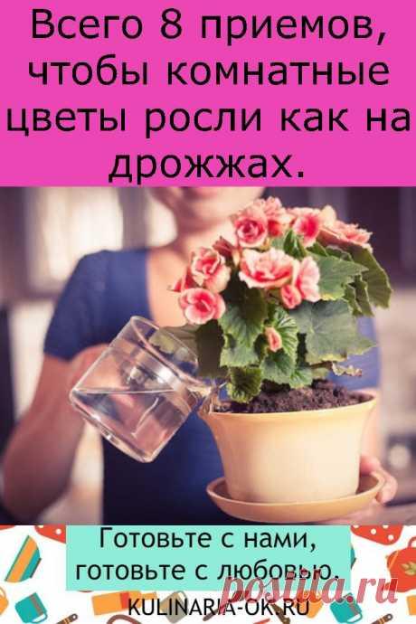 Всего 8 приемов, чтобы комнатные цветы росли как на дрожжах.
