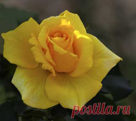 tasha7 — «Любви медовой аромат...» на Яндекс.Фотках