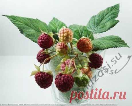 Мастер-класс: малина из фоамирана Мастер-класс по изготовлению листьев и ягод малины из фоамирана, подробные фото