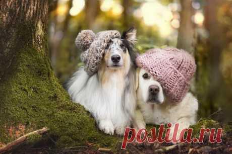 Очень милые снимки;) Осенние собаки в фотографиях Габи Стиклер (Gabi Stickler) — Фотоискусство