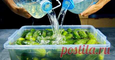 Огурцы в контейнере, как бочковые - Со Вкусом