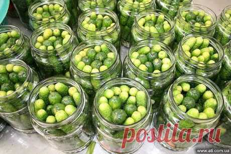 """Pickles \""""childly\""""\u000a\u000aIngredients (at the rate on 3 one-liter jars):\u000aSalt — 2 tablespoons\u000aSugar — 5 tablespoons\u000aLemon acid — 1,5 h spoons\u000a\u000aPreparation:\u000a1. We cover a bottom of each can a leaf of horse-radish, currant leaves (2 pieces), a fennel umbrella, we add 2 garlic gloves, black pepper (2-3 peas), bay leaf.\u000a2. Compactly it is also densely put in banks cucumbers and we fill in with boiled water. We leave for 10 min. then we merge water. Repeatedly we pour boiled water in Bang..."""