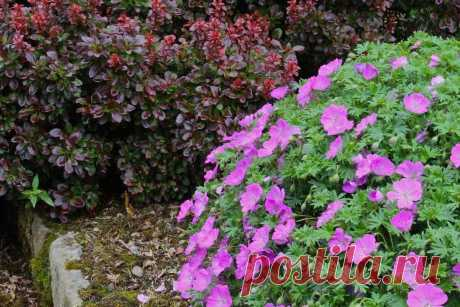 Многолетники цветущие весной: фото, видео, самые неприхотливые цветы