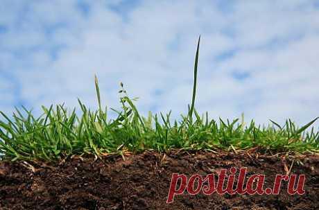 Устранение кислотности почвы » Садовед