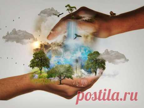 Как человеку сохранить природу? | nashi-pitomcy.ru