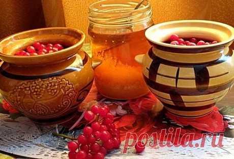 Калина с мёдом от всех болезней: рецепты — СОВЕТНИК