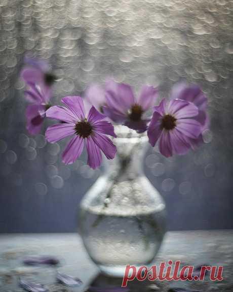 """Мира в Сердце...😇 ...Любой мир ничего не стоит, если нет  Мира в Сердце...Такое короткое слово""""МИР"""", но такое значимое... Без мира в сердце жизнь пуста.  ~ Забыв на миг про суету,  в Душевный храм откройте дверцу.. Умейте слушать тишину..  Умейте слышать своё Сердце..  ~ Мы просим у судьбы полегче доли, Молитву шепчем Богу, чуть дыша.. Но так устроен мир, что только в боли Растёт и развивается Душа.."""