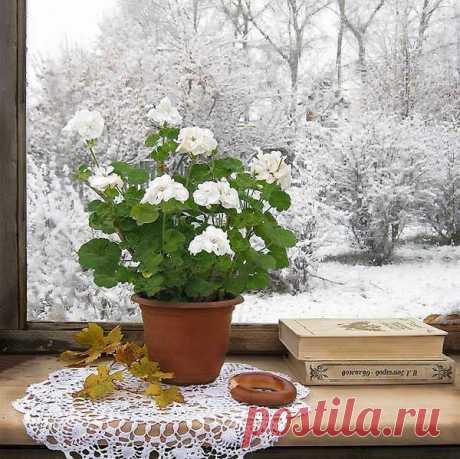..а где-то рядом, у окна, на подоконнике в тиши, стояла вечная Весна — цветы в горшках, так.., для души.  С. Сухомлинов