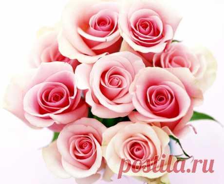 127 Rosas Imágenes, Fotos y Gifs para Compartir - Imágenes Cool