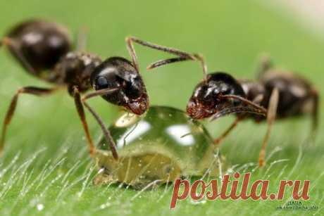 Как спасти дачный участок от муравьиного нашествия