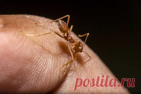 Когда друг оказался вдруг – 7 причин избавиться от муравьев в саду и огороде