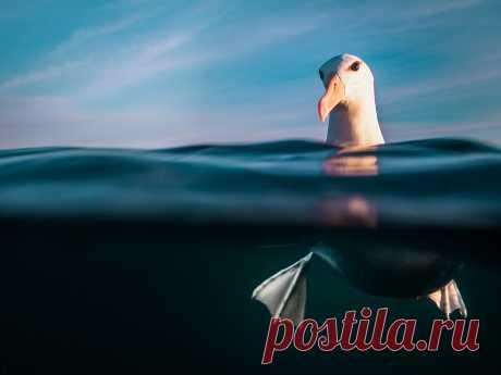 Подводный снимок акул стал лучшим на международном фотоконкурсе - Новости Mail.ru