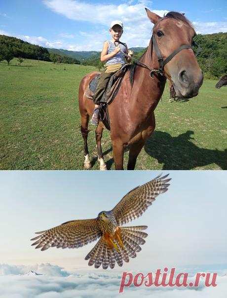 Притча о Соколе, который боялся летать | КНИГА ЖИЗНИ  | Яндекс Дзен