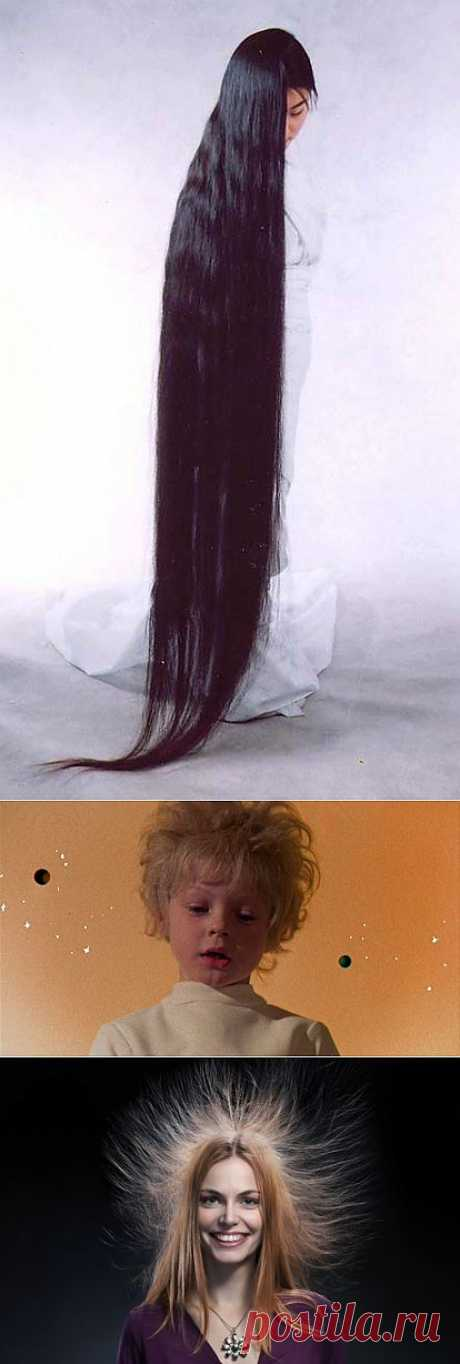 Наши волосы   НАУКА И ЖИЗНЬ