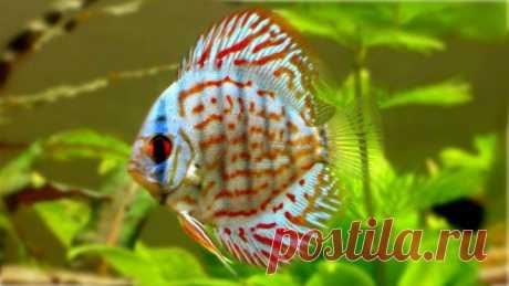 18 удивительно красивых рыбок