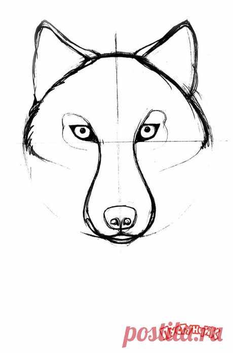 Как нарисовать волка поэтапно. Мастер-класс как рисовать волков