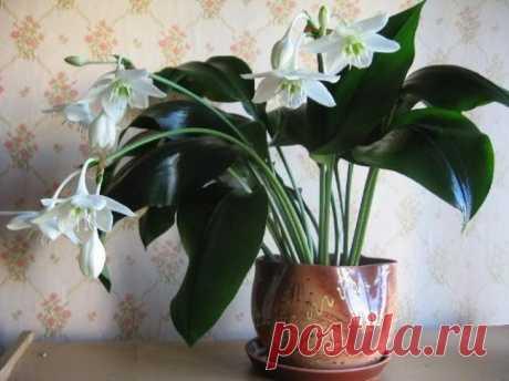 g>Полезные советы для комнатных растений.