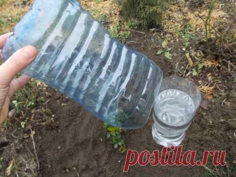 Делаем солнечный дождеватель из 2 бутылок — и растения сами поливаются целый месяц   Маленький сад на краю Вселенной   Яндекс Дзен