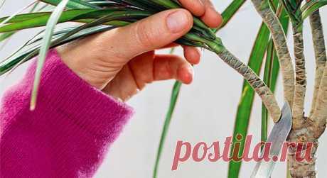 Необычный способ укоренения растений. Работает на 100% — Мир Растений