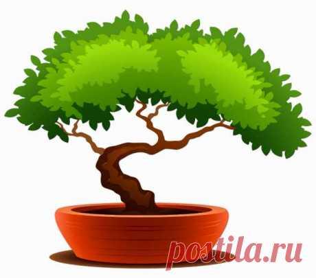 Комнатные растения — частное лицо №5821409 - Барахла.Нет