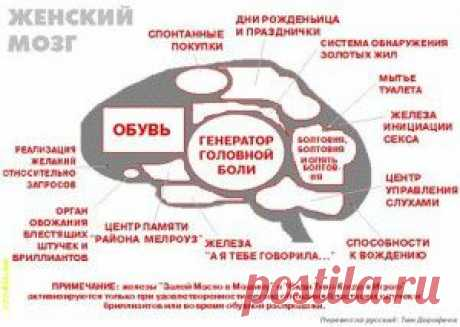 Женщина и мозг... А ведь это похоже на правду)))))