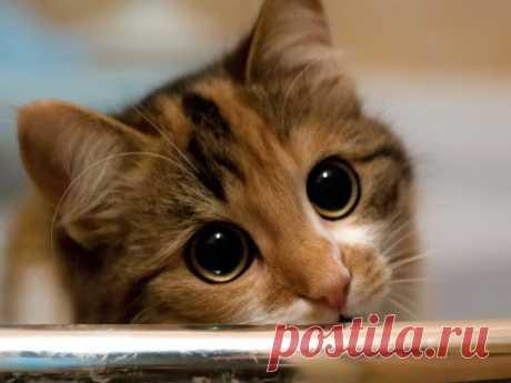 Уровень мимишности зашкаливает! Ученые раскрыли истинное отношение кошек к человеку     Благодаря американским ученым стало известно истинное отношение домашних кошек к своим хозяевам. Результаты исследования на эту тему опубликованы в журнале Behavioural Processes, сообщает The Tele…