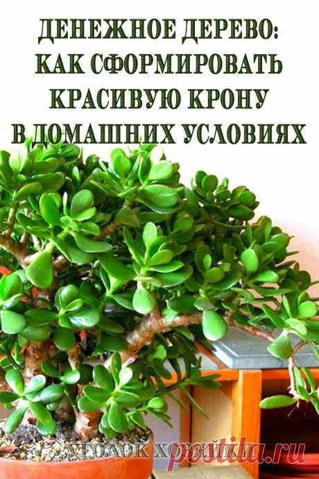Денежное дерево как основа стильных композиций