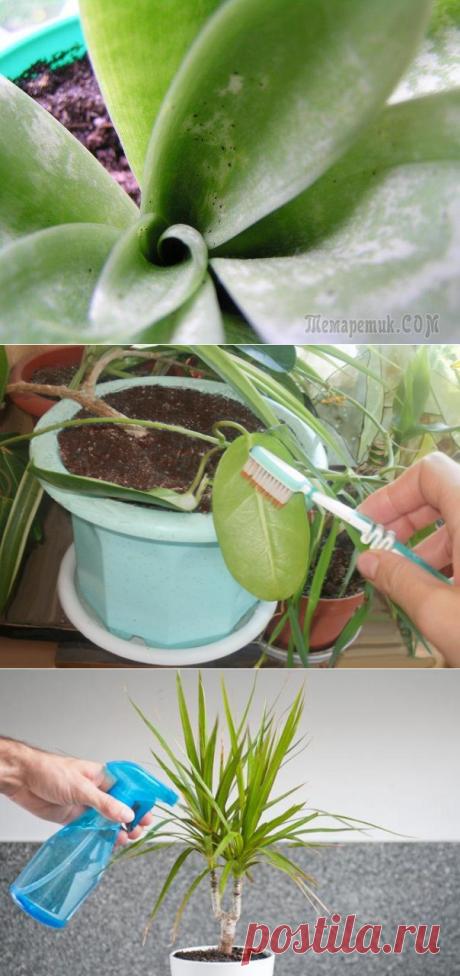 Вредители, повреждающие надземную часть растения – как с ними бороться?