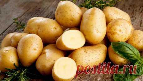Как правильно хранить и готовить картофель Картофель нельзя хранить в холодильнике, так как он приобретет нежелательный привкус. При покупке следует выбирать картофель плотный, без ростков и зеленых или черных точек.
