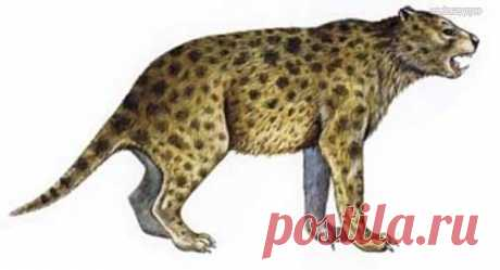 Сумчатый лев фото