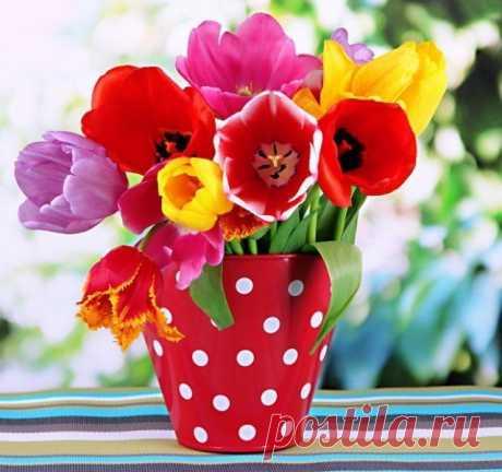 13 самых частых вопросов о тюльпанах – все, что вы хотели узнать | Тюльпаны, Нарциссы (Огород.ru)