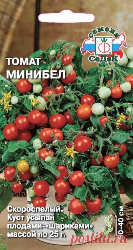СеДеК - Продажа семян по России - Семена овощей, пряных культур и ягод - Томат Минибел