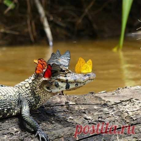 Даже если ты крокодил, это не мешает тебе быть милашкой 😊