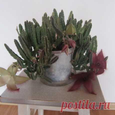 Проблемы комнатных растений: почему сохнут листья и не растут цветы, фото комнатных вредителей